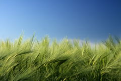 Landbouwgronden Royalty-vrije Stock Afbeelding