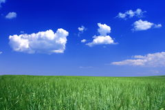 Landbouwgronden Royalty-vrije Stock Foto