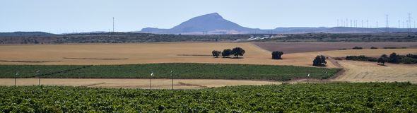 Landbouwgronden Castilla La Mancha Stock Foto's