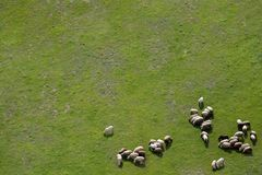 Landbouwgronden en schapen Stock Foto's