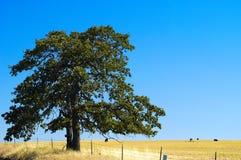 Landbouwgronden, Goldendale, WA Royalty-vrije Stock Foto's