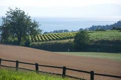 Landbouwgronden in Zwitserland Royalty-vrije Stock Afbeelding