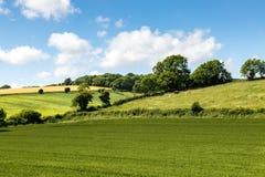 Landbouwgrondlandschap Stock Afbeeldingen