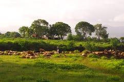 Landbouwgrondscène Royalty-vrije Stock Afbeelding