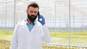 Landbouwingenieur in serre mobiel gebruiken, sprekend op smartphone stock video