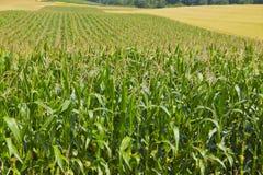 Landbouwlandschap Stock Fotografie