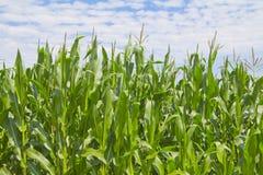 Landbouwlandschap Royalty-vrije Stock Foto