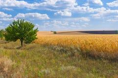 Landbouwlandschap bij dalingsseizoen Stock Afbeelding