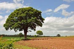 Landbouwlandschap in het Engelse platteland Stock Afbeelding