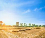 Landbouwlandschap, het oogsten stro op gebied met zonneschijn en blauwe hemel Stock Foto's