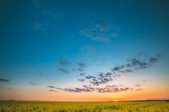 Landbouwlandschap met Bloeiende Bloeiende Verkrachting, Raapzaad, Oliezaad stock afbeeldingen