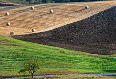 Landbouwlandschap met strobalen Stock Fotografie
