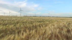 Landbouwlandschap op een gouden gebied van tarwe en windturbines op de achtergrond van duidelijke hemel Luchtonderzoek sluit stock footage