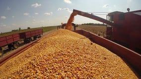 Landbouwmachines in Actie tijdens Graanoogst stock footage