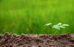 Landbouwmilieu op concept van de aard het groeiende stap royalty-vrije stock foto's
