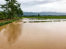 Landbouwpadieveld overstroomde schade royalty-vrije stock foto's