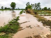 Landbouwpadieveld overstroomde schade royalty-vrije stock afbeeldingen