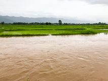 Landbouwpadieveld overstroomde schade royalty-vrije stock fotografie