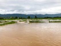 Landbouwpadieveld overstroomde schade stock afbeeldingen