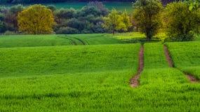 Landbouwproductie Tarwecultuur Gebied naast het hout Mooie Mening royalty-vrije stock foto