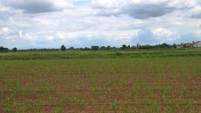 Landbouwtijdtijdspanne stock videobeelden