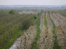 Landbouwweg, rechts van het jonge appelbomen die zich kort voor het bloeien, links van hen bevinden tot bloei komende Cher Royalty-vrije Stock Foto's