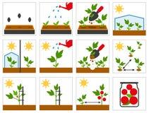 Landbouwzaailing Landbouwtechniek vector illustratie