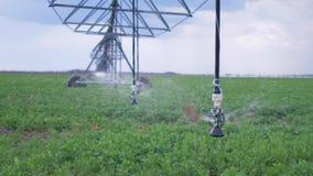 Landbouwzaken, irrigatiesysteem in verrichting in het close-up van het gebiedenraapzaad stock videobeelden