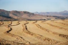 Landbouwzuid-afrika stock foto