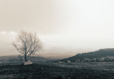 Landcape Photos libres de droits