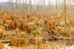 Landcape del pantano de turba del otoño Área salvaje del pantano y del pantano Naturaleza hermosa fotos de archivo