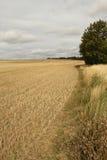 Landcape do campo de restolho cortado Fotografia de Stock Royalty Free