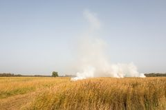 Landcape field with reed burning and smoking. Stock Image