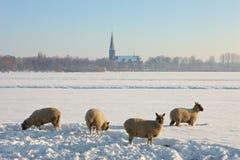 Landcape gelé avec quatre moutons Images libres de droits