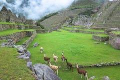 Landcape Mach Picchu w Peru Obrazy Stock