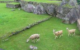 Landcape Mach Picchu w Peru Obrazy Royalty Free