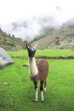Landcape Mach Picchu w Peru Zdjęcia Royalty Free
