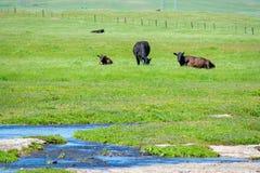 Landcape van Landbouwbedrijf in Centraal Californië royalty-vrije stock afbeeldingen
