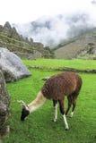 Landcape van Machu Picchu in Peru Stock Afbeelding