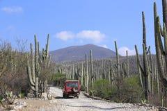 Landcruiser nei giacimenti del cactus fotografia stock