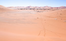 Landcsape γύρω από νεκρό Vlei στην έρημο Namib Στοκ Εικόνα