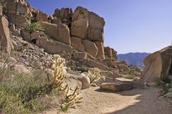 Landcsape del deserto Fotografia Stock
