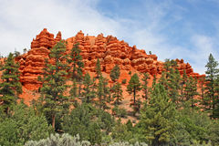 Red cliffs in Red Canyon Utah Royalty Free Stock Image