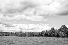 Lande avec la bruyère commune fleurissante, fond naturel photo stock