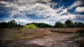 Lande dans la réserve naturelle Boberger Niederung photos stock