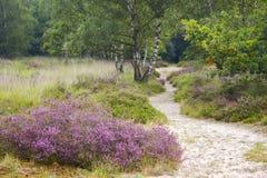 Lande en parc national Maasduinen, Pays-Bas photo stock