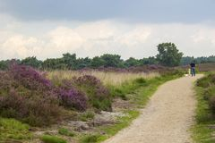 Lande en parc national Maasduinen, Pays-Bas image stock
