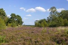Lande en parc national Maasduinen, Pays-Bas images stock