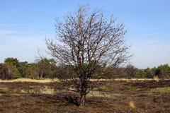 Lande endommagée chez le Strabrechtse Heide photographie stock libre de droits