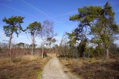 Lande naturelle néerlandaise Strabrechtse Heide image stock